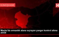 Son dakika haberi… Maçka'da ormanlık alana sıçrayan yangın kontrol altına alındı